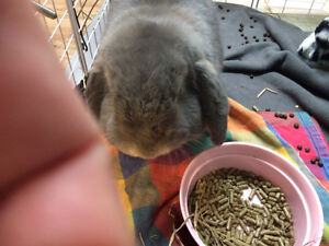 Kozy kritters has bunnies for adoption
