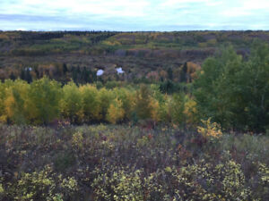 Farm land with great hunting for sale