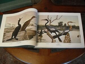 BIRDS AND TREES OF NORTH AMERICA BY REX BRASHER