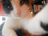 """MEET """"DOMINO"""" -- Fixed & Vaccinated  -- @ Small Things"""
