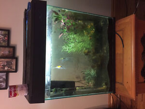 115 Litre Freshwater Fish Tank with Five Fish and Acessories