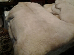 Lamb Skins from biodynamically raised lambs  100% neutral Kitchener / Waterloo Kitchener Area image 4