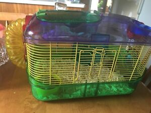 Baby hamsters with cage!
