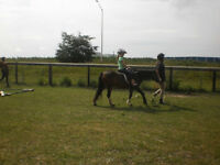 Horse riding - Every weekend!!
