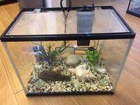 Small Fish Tank - Aquarium including extras