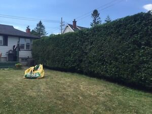 Professional hedge trimming and pruning Kingston Kingston Area image 6