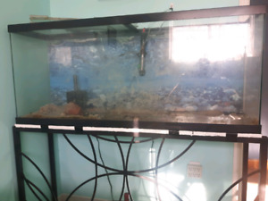 55 gal tank with metal stand