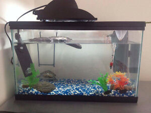 10 Gallon tank with all accessories