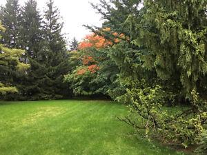 Excutive home near University Hospital London Ontario image 1