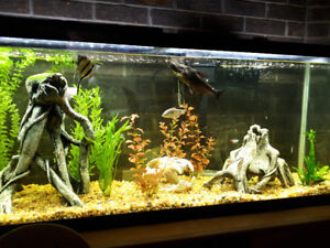 Fish need a new home