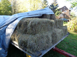 8 small bales of 2nd cut hay