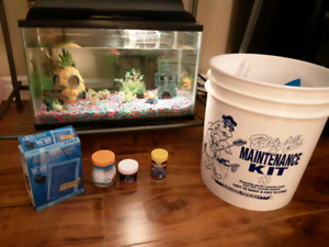 10 gallon fish tank with all accessories and fish!