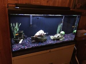 36 gallon aquarium