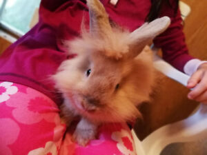 4 Month Old Bunny for Sale