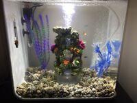 BiOrb Flow - 30 Litre Tropical Fish Tank