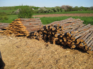 Fence Posts For Sale - Spruce - 6ft - sharpened