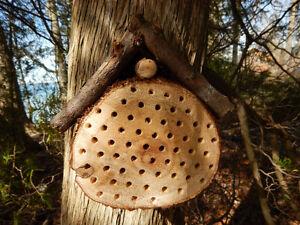 """Bee """"Hotels"""" Kitchener / Waterloo Kitchener Area image 1"""