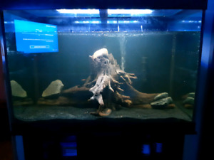 3 pieces of driftwood