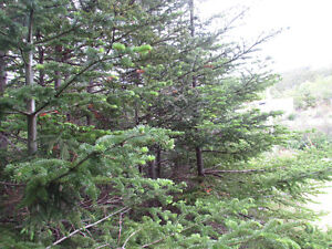 26-28 CROSS MEADOW, I ACRE BOREAL FOREST...CBS. St. John's Newfoundland image 17