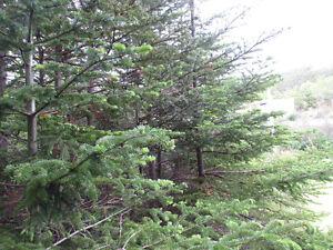 26-28 CROSS MEADOW, I ACRE BOREAL FOREST...CBS. St. John's Newfoundland image 17