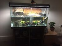 Map turtle will full set up