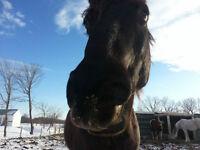 recherche pension pour cheval secteur joliette