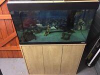 Fluval Roma 125 Fish Tank