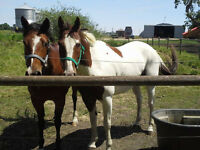 2 6yrs olds for sale both had ground work done