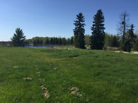 Horse Pasture for rent. 10 min. NW of Olds