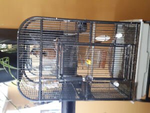 2 zebra finches with cage, SOLD