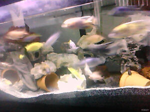 i  am   selling   a   75  gallon   20  and    30