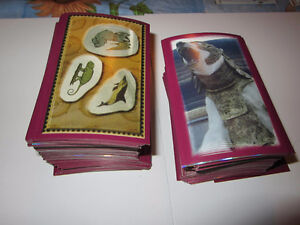 The Golden Compass Panini Sticker Lot of 500+ Stickers