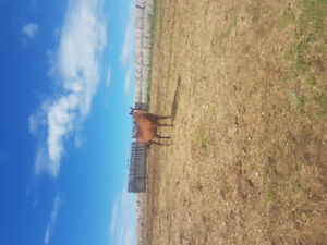 Kids-Horse for sale