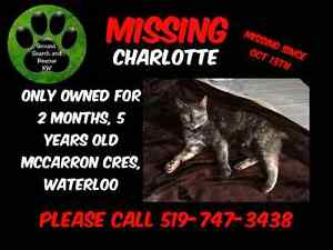 Charlotte is missing Kitchener / Waterloo Kitchener Area image 1