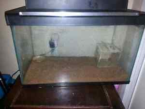 SNAKE  Ball Python BEST OFFER everything included  London Ontario image 5