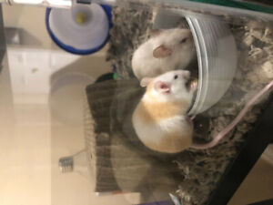 loving home for 2 pet mice