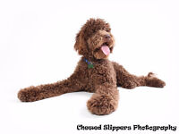 WORKSHOP - MASTERING THE BUSINESS OF PET PHOTOGRAPHY
