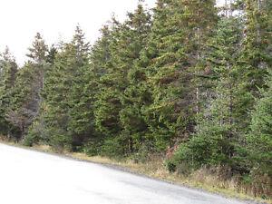 82-94 RIDGE ROAD, CHAPEL'S COVE..2 ACRES St. John's Newfoundland image 19