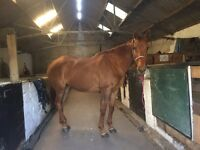 16.3hh For Part loan