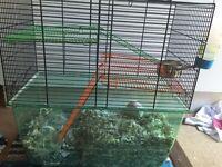 Two male gerbils and gerbilarium