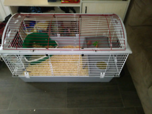 Lapin avec une grosse cage