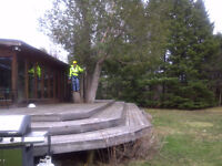 TreeRemovalQuotes.ca - get an online quote or call us today