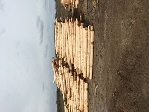 Peeled Cedar Fence Posts