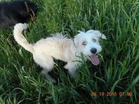 IROQUOIS FALLS DOG WALKING \ CARE IN YOUR HOME