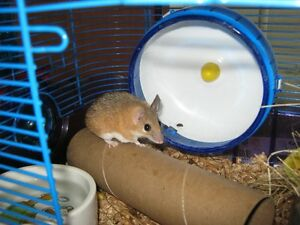 Spiny Mice and Cage