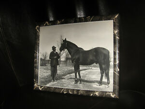"FOR THE HORSE LOVER ""Man O War"" vintage photo - new price"
