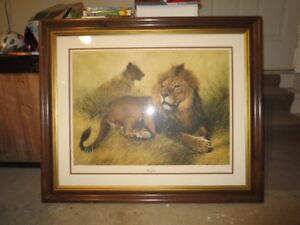 """38"""" x 32"""" Print of Lion and Lioness"""
