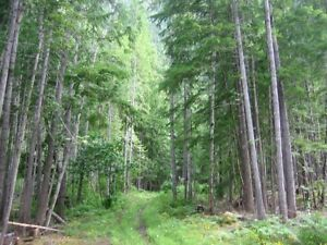 5.5+ acres for sale Revelstoke British Columbia image 4