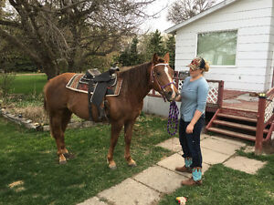 AQH Mare for Lease