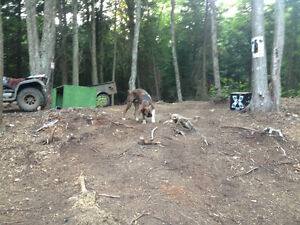 Hunting lot in algonquin highlands for sale Hunt camp W permit Peterborough Peterborough Area image 7